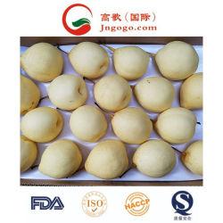 Pera fresca Frutis fresco (28/32/36/40/44) della nuova del raccolto pera dello SGS Ya