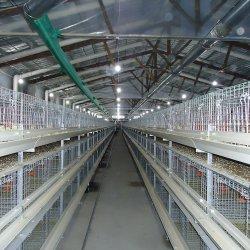 Estrutura de aço galvanizado prefabricados Frango Designs de casa de aves de capoeira provenientes da China
