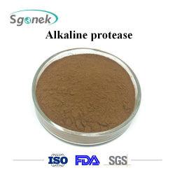고품질 효소 9014-01-1 알칼리성 프로테아제 분말 식품 첨가제 알칼리성 프로테아제 부피 알칼리성 프로테아제