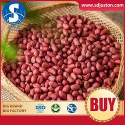 Neue rote Haut-Erdnuss-rohe Kerne für Verkauf mit guter Qualität