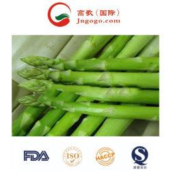 Nova cultura Super Qualidade IQF Espargos congelados /Espargos brancos e os vegetais congelados