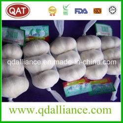 Niets GMO Normaal Wit Knoflook met Iso9001- Certificaat