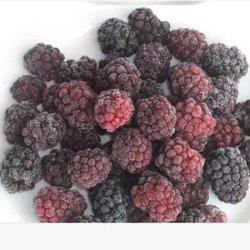 Mora congelata IQF Frozen della frutta fresca alla rinfusa della frutta