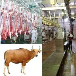 Alimentação Factory-Direct matadouro de bovinos para abate de gado Turnkey em linha de abate de gado House