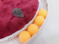 قطّ لعبة جديدة تصميم بيع بالجملة قطّ لعبة كرة مع مصغّرة فأس وقطر وسادة