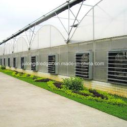 La Chine facile installé en usine le faible coût du film plastique serre serre hydroponique pour de plus en plus de légumes