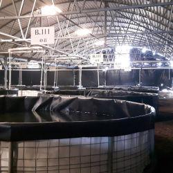 Film plastique anti-suintement renforcé 0,5mm 1mm HDPE LDPE 2mm Doublure géomembrane bassin pour le barrage aquacole de Pool Lake River Doublure pour l'exploitation de poissons en décharge