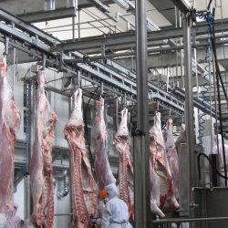 Processus de la viande de boeuf abattoir de la machine pour le boeuf de l'abattage à la chambre des machines