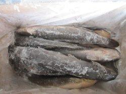 G 500-1000большого размера свежие сома дешевые цены рыб сома для зажигания