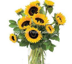Fiori freschi floreali superiori di Sun dei fiori da taglio