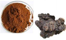 제약품에서 이용되는 산화 방지제를 위한 Chage 버섯 추출