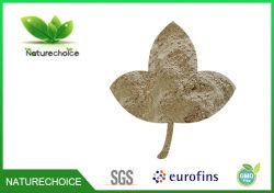 Polvere di Astagali della polvere della radice dell'astragalo, polvere organica della radice dell'astragalo
