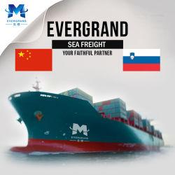 Berufsseefracht-Verschiffen-Service nach Slowenien von Guangzhou/von Shenzhen/von Xiamen/von Hong Kong