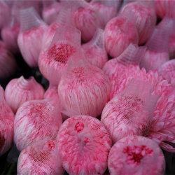 Высокое качество упаковки цветов из пеноматериала взаимозачет закрывается защиты сетей