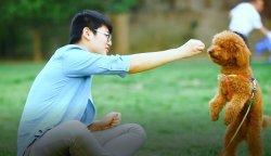 Vêtements Pet Pet Cage saine OEM de nourriture sèche pour chien