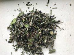 Feuille de thé blanc White Peony 6901
