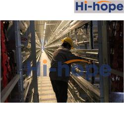 Construção de exploração automática do sistema de remoção de estrume automática do sistema de coleta de ovos Automática