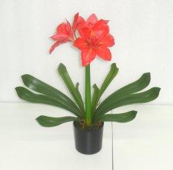 Clivia Miniata réaliste rouge Fleur artificielle plante en plastique avec la racine du semoir pour la décoration intérieure