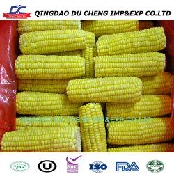 La nouvelle récolte de maïs sucré Super congelé sur le COB ensemble