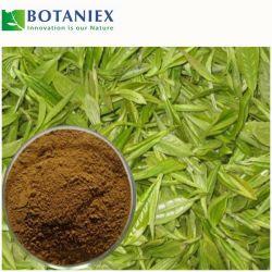 Anti-Cancer extracto de té verde natural L-Theanine