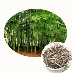 Ма Чжу новых рейсов из бамбука asper Dendrocalamus высокого прорастание семян