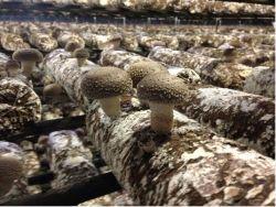 Журнал грибов
