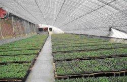 Jardin de fleurs Légumes Fruits La plantation de verre de ferme Maison verte