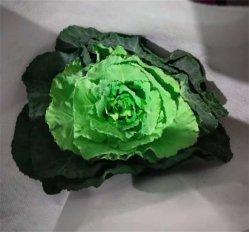 Décoration florale fraîche Wholsales cadeaux Bouquet le chou vert Brassica