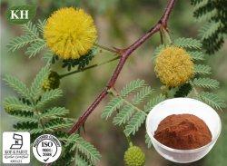 Acacia Catechu extraire catéchines 40 %