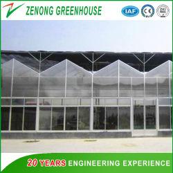 Installation facile de structure en acier pour l'Agriculture de serre en polycarbonate /culture/ la plantation de légumes