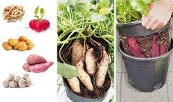 종묘장 토마토 감자 설치 물통 펠트 꽃은 남비 둥근 플랜트가 물통을 증가하는 짠것이 아닌 묘종 물통을 증가한다