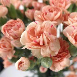 La Chine Vente chaude Fleur Fleurs coupées fraîches Spray Carnation Orange Rose pour la décoration