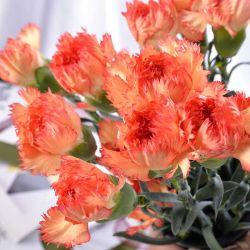 Высочайшее качество опрыскивания Carnation свежий порезанный цветок оранжевого цвета для украшения