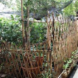 Natürlicher fechtender Qualitäts-Bambus-Bambuszaun