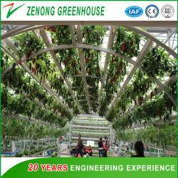 Type de verre de Venlo Parc de l'Agriculture pour les semences de reproduction de serre/exposition/restaurant Plantation/Eco