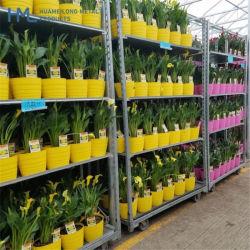 温室の縦のプラント養樹園の花ラックラッキングのトロリー