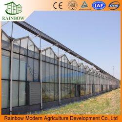 Venlo doble hueco de efecto invernadero de cristal templado con Hidroponía Sistemas de Cultivo de Hortalizas Flores//// jardín de Tomate la granja