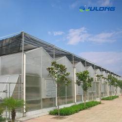 Les systèmes hydroponiques agricoles Feuille utilisé en polycarbonate PC Carte Green House panneau serre Multi-span