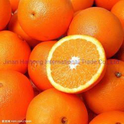 Deliciosa e fresca Navel Orange, Prémio Chineses Navel Orange