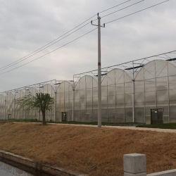 Multispan pour effet de serre Fraise Framboise maisons raisin vert agricole