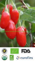 China Gojiberry orgánicos Wolf Berry la máxima calidad a bajo precio con certificado orgánico Issude por la UE y EE.UU