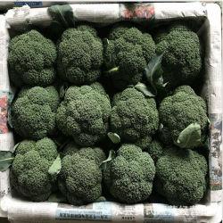 Sorteer de Groothandelsprijzen van Broccoli