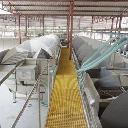 L'équipement 500 bph Poulet Abattoir de Volailles de Dubaï à l'abattage pour la vente de la machine