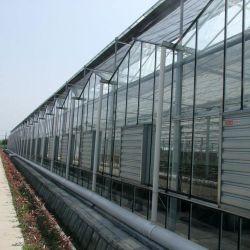 Hidropónicos agrícola vidrio fotovoltaico (PV) de efecto invernadero inteligente para los equipos de riego