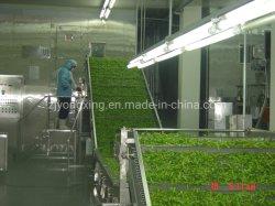 صناعيّة يجمّد خضرة وثمرة/طعام سيّل [فريز مشن] سريعة/إنفجار نفق دفع [فريزر/يقف] آلة لأنّ عمليّة بيع يجعل في الصين