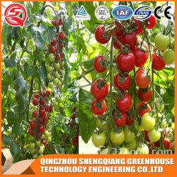 Landbouwproductie kleine plastic Film Ready Garden Greenhouse voor Flower/fruit/Vegetable