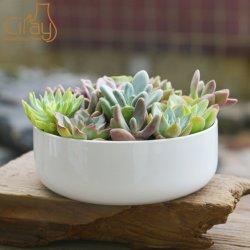 POT di ceramica della pianta della Tabella all'ingrosso per il Succulent del fiore