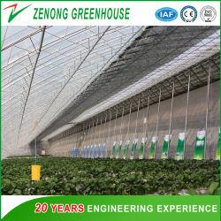Зеленый солнечной энергии для сева овощей Anti-Season/клубничный подборочные аппараты для продажи
