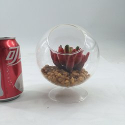Desert Plantas suculentas artificial artefactos
