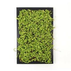 Planta decorativa de pared artificial conservan el bastidor de musgo verde